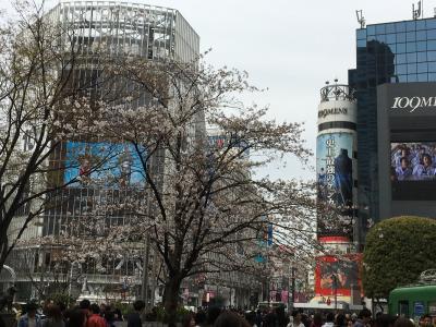 2016年桜を満喫~東京へ①渋谷~吉祥寺~新宿