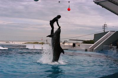 迫力あるイルカショーが見れる & 空飛ぶイルカ 【 大阪 岬町 みさき公園 】
