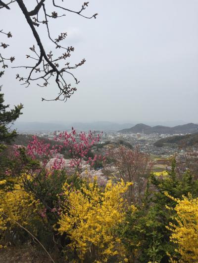 JR東日本ポスターにまたやられて、花見山