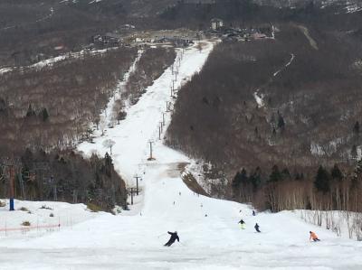 残雪の奥志賀高原の春スキー☆里では花達が春を謳歌しています♪♪~♪ナンジャモンジャ の白い花も…^ ^r