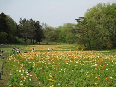 犬連れ日帰りドライブ、国営武蔵丘陵森林公園は超お勧めです。