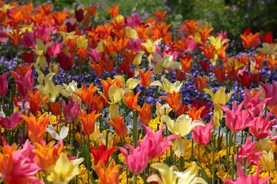 春の饗宴 (東山植物園 & なばなの里)