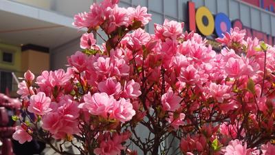 万博公園(05) 日本庭園駐車場とエキスポシティのニフレルを往復。