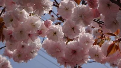 伊丹散策 荒巻バラ公園~昆陽池昆虫館まで、天神川左岸を歩きました。