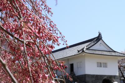 桜の霞城公園