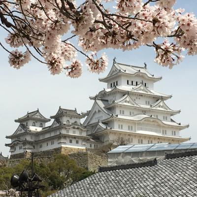 姫路城~今年の桜は綺麗かった