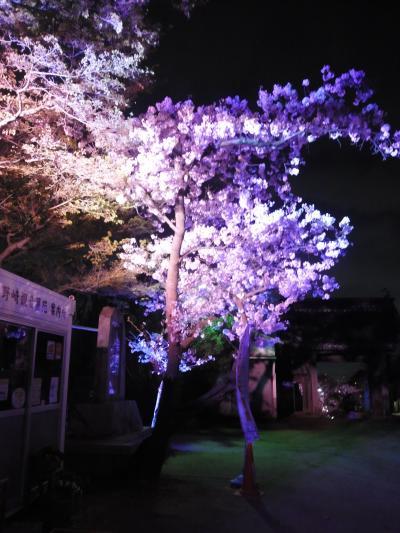 超穴場 閑散としている 野崎観音の桜ライトアップが大変綺麗でした。夜景も楽しめるいい場所、