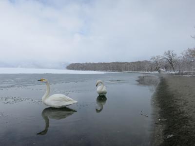 春はすぐそこ♪ 道東温泉癒しの旅 *3* 《摩周湖》~ 《川湯観光ホテル》~《屈斜路湖》