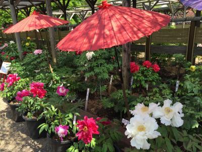 【駅からハイキング】町田薬師池公園四季彩の杜 鎌倉古道と花めぐり
