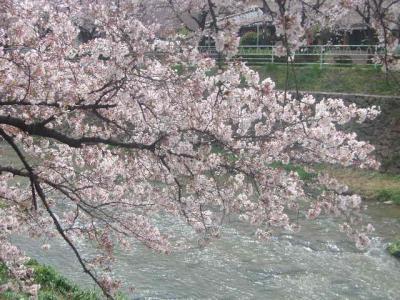 2016春:日韓桜見物の旅(パート1:日本編)