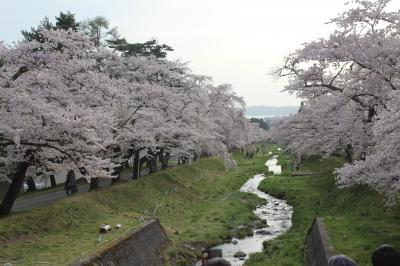 福島の桜名所めぐり(初日は鶴ヶ城)……今年の桜前線の北上は例年より半月早い!