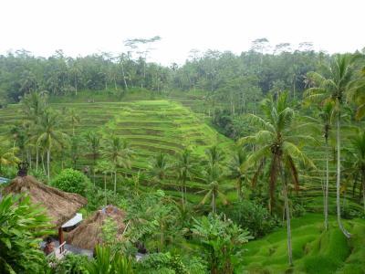 バリ島5日間の旅