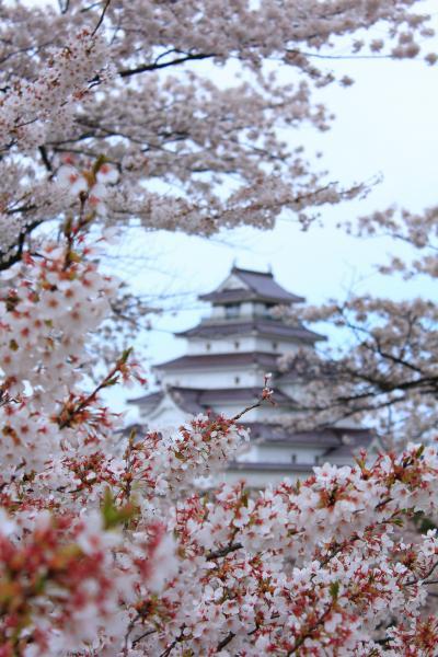 ラヴィアンさくら桜三昧の幸せ  会津若松鶴ヶ城