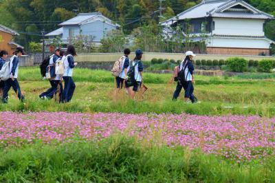 2016 春 奈良旅−7 愛しの明日香へー4 MICHIMO で めぐる 飛鳥の郷 下