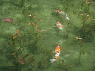 モネのまねの池
