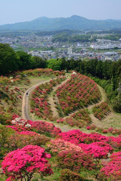 山一面を彩る紅い躑躅に魅せられて・・・ゴールデンウィークに「笠間つつじまつり」へ♪