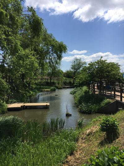 さわやかウォーキング「水辺のやすらぎパークの牡丹と九華公園のつつじ咲く水郷の町の歴史めぐり」に参加しました
