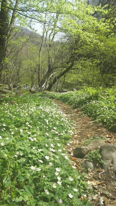 清里から花咲く春の飯盛山へ