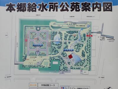 憲法記念日祝日に本郷・湯島・御茶ノ水界隈を歩く