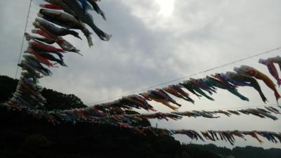 泳げ!1200匹のこいのぼり ~ 相模川高田橋
