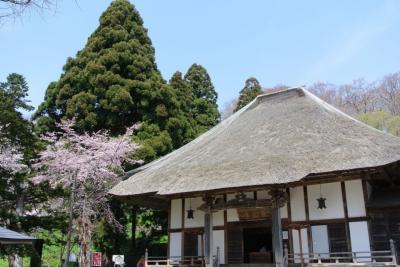 有珠善光寺 石割桜のさくら哀しき