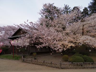 桜追いかけて津軽~三内丸山遺跡と弘前さくらまつり~②