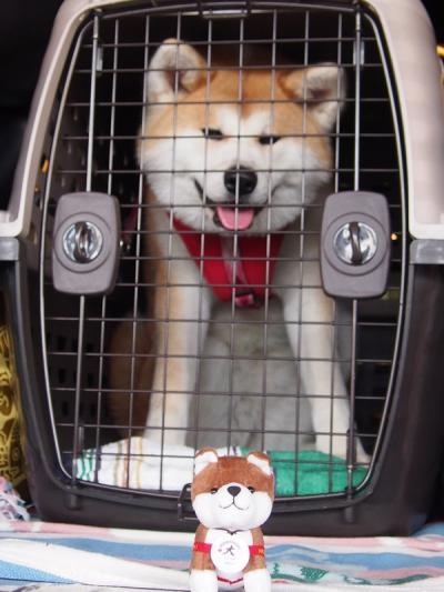 東北~北関東縦断 秋田犬と一緒のドライブ旅行