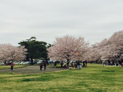 2016年4月 川越市場場外でランチ&狭山稲荷公園で花見