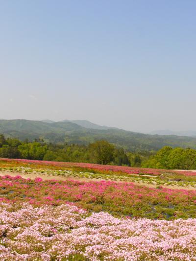 2016GW とびしま海道ドライブと世羅の花畑 その2:世羅高原の花畑編