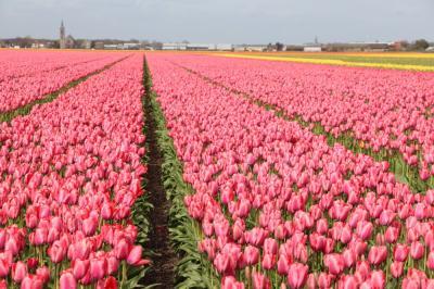 オランダへ