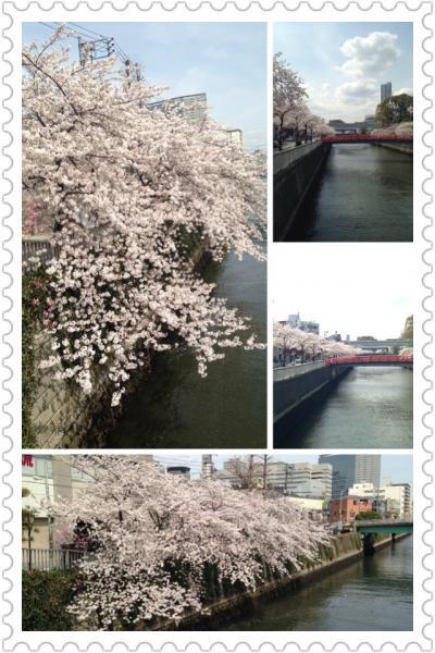 品川近隣の桜の穴場巡り PART?