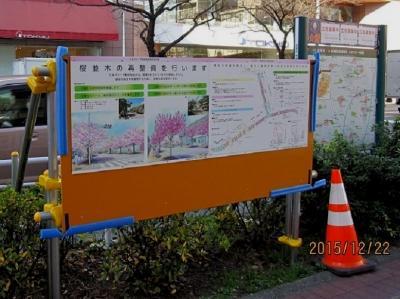 たまプラーザ駅前桜並木再生計画① 計画の概要と、2015年12月現在のようす