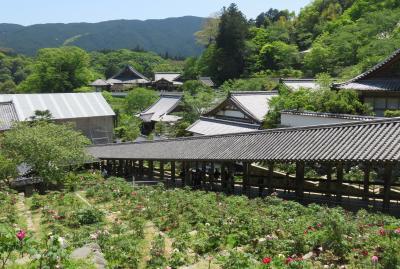 2016春、奈良のお寺の花巡り(8/17):4月30日(8):長谷寺(2):屋根が付いた石段・登廊、牡丹、クレマチス、紀貫之歌標