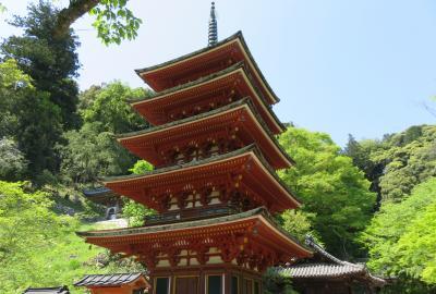 2016春、奈良のお寺の花巡り(11/17):4月30日(11):長谷寺(5):牡丹、五重塔、ウツギ、杉の古木、写経殿