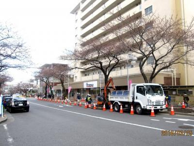たまプラーザ駅前桜並木再生計画② 2016年3月25日の作業状況
