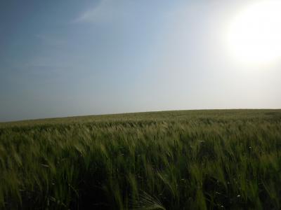 高敞(コチャン)の青麦畑を求めて