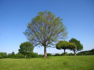 三郷市の県営みさと公園に行ってみた
