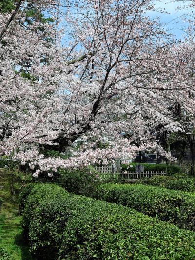 広島-8 縮景園a 大名庭園を大改修、歴史公園に ☆さくら咲く朝、新緑冴えて