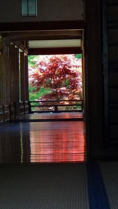 ゴンママの「歩こう会参加」・・・奈良の古都を歩く 下巻。