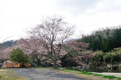 1泊2日で行ったお花見キャンプ(三重県OKオートキャンプ場)
