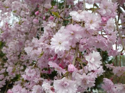 春の北軽井沢バカンス♪ Vol1 ☆浅間高原・北軽井沢駅舎・浅間牧場♪
