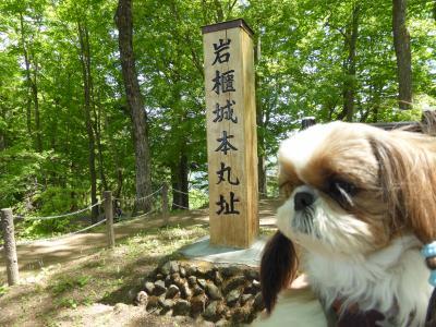 春の北軽井沢バカンス♪ Vol5 ☆東吾妻 大河ドラマ「真田丸」のオープニング「岩櫃城」 愛犬と一緒に登る♪