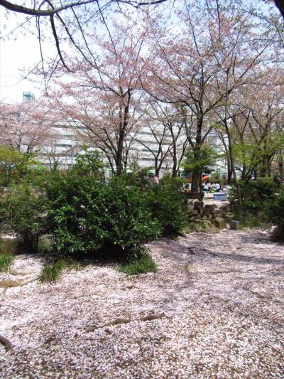 一時帰国04★川口★川口西公園リリアパークでちょっとお花見