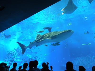 週末沖縄旅行*ついに美ら海水族館