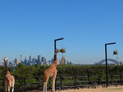 初の南半球★シドニー旅行⑤動物園