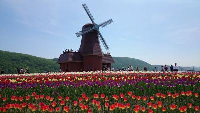 芝桜とチューリップ 北海道5月は過去最高の暑さ