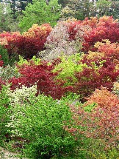 福島4 花見山公園B 下り坂道も色どり豊かに ☆数多くの花木と出会い