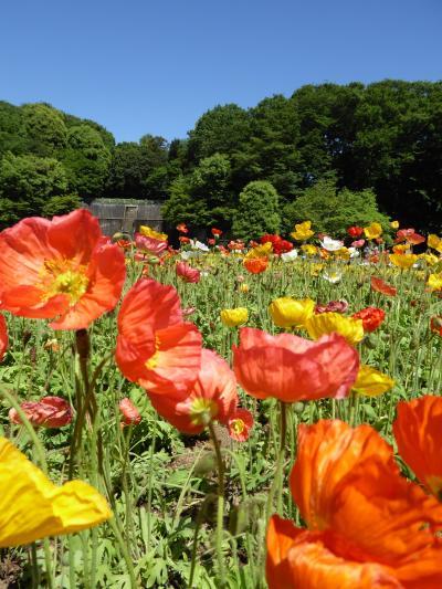 初夏の川口グリーンセンター♪ Vol1 花がいっぱいの風景♪