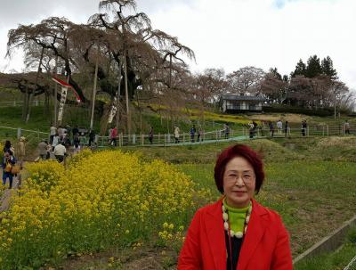桃源郷、福島の花見山公園と三春の滝桜のはずですが?