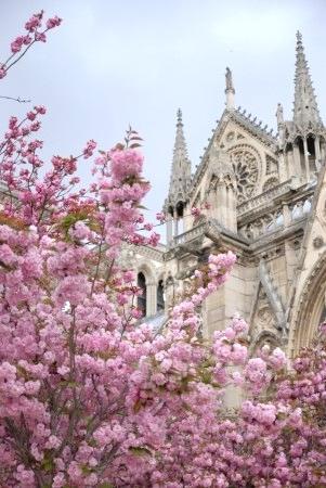 花盛りのパリ * ノートルダム大聖堂